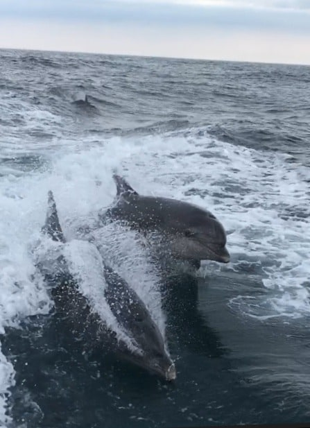Dolphins-St-Ives