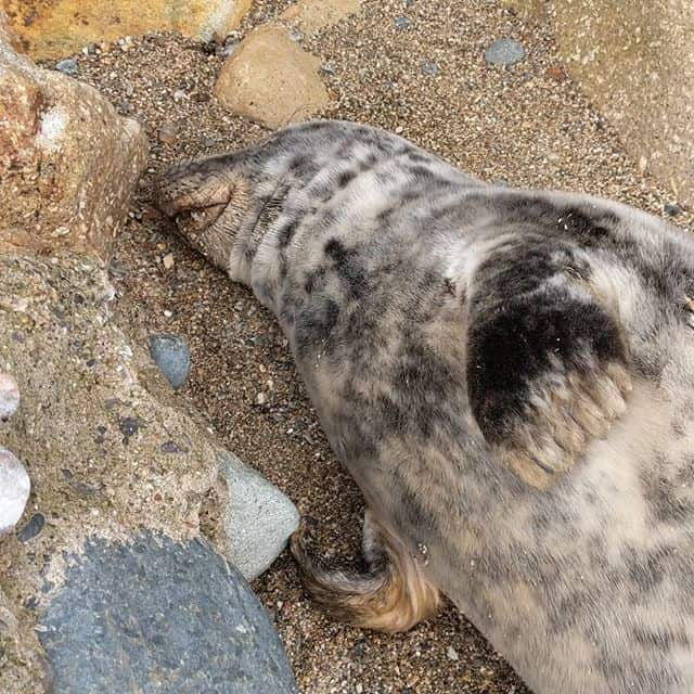 Seal Rescue in Cornwall