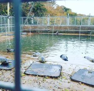 seal rescue sanctuary